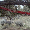 Pronghorn Strap to assist hanging Tarp