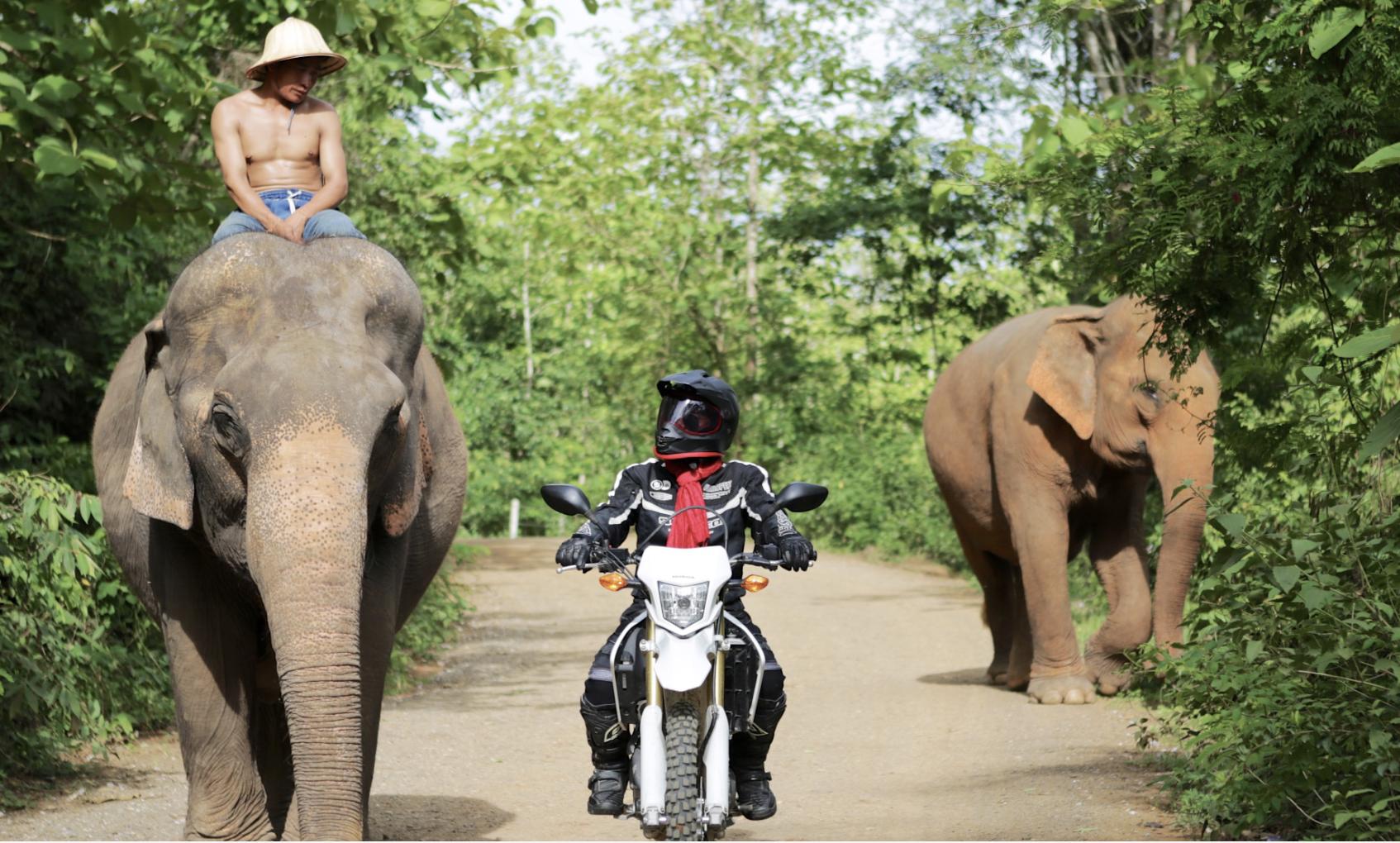 Motolao - The Grey Elephant 5 Day Tour