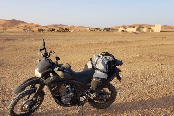 Yamaha Tenere 660 with Coyote Saddlebag