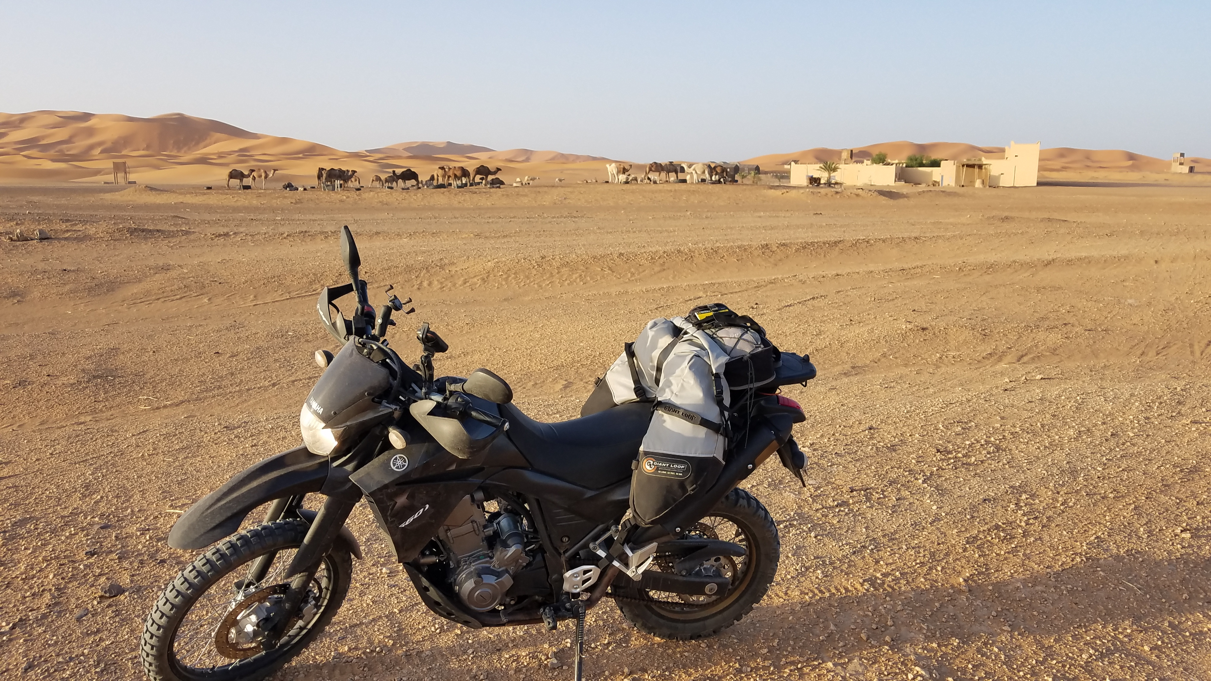 Yamaha Tenere 660 with Coyote Saddlebag